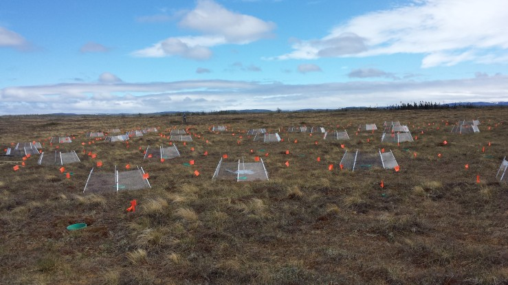 Peatlands and Climate Change Field Work; Submitted by Dr. Jianghua Wu